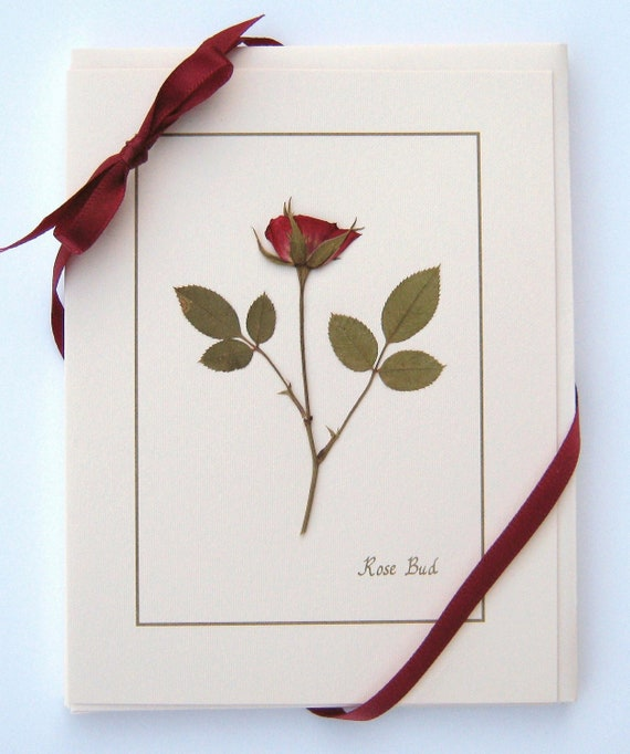 Rose Card Gift Set of 4 real pressed roses on Stationery greeting cards for her or keep and frame for your decor!