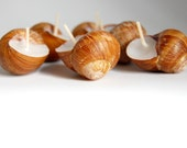 Beach Weddings Candles Snails Shell Candle Eco-friendly Candle - Choose Your Scent