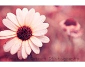 Fine Art Photography Digital Download White Flower Daisy Pink Surreal Bokeh Printable Art Photo