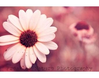 Fine Art Photography Digital Download White Flower Daisy Pink Surreal Bokeh Printable Art Photo