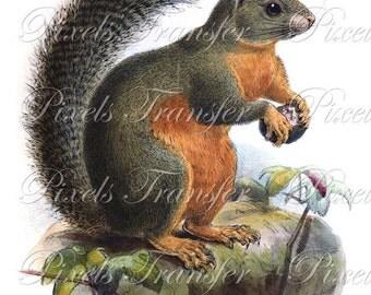 SQUIRREL Instant Download digital download, vintage mammals clipart illustration 192