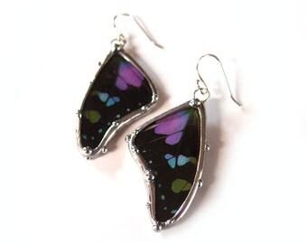 Butterfly Wing Earrings - Real Butterfly Jewelry