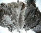 Ostrich Feathers for Crafts, Hand Spinning, Hat Making