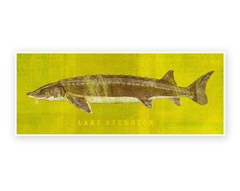 "Freshwater Fish Art- Lake Sturgeon Art Print 6.6"" x 18""- Fish Decor for Dad- Gift- Kids Fish Art- Fishing Art- Gift for Dad- Fishing Images"