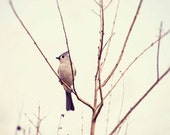 nature photography bird wall art tree photo gray home decor animal photograph Tufted Titmouse no 2 - eireanneilis