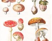 vintage mushroom print, a printable digital image,  no. 392