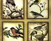 Song Bird, Wood Coasters (Set of 4) Spring Song in there Nest Bird Art Coaster Art DC017