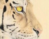 Original Art-Coloured Pencil Tiger Print