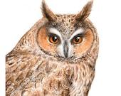 Owl Art Print - 8x8 inches (20x20cm) - Long-Eared Owl giclee print - wildlife nature art woodland bird owl decor