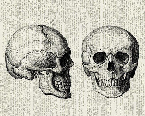 skull dictionary page print