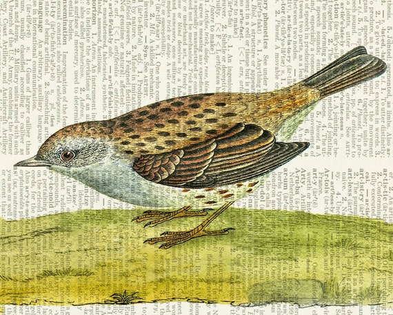bird VIII dictionary page print