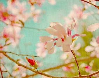 Pink Magnolia Photograph, Magnolia Print, French Country Decor, Flower Photography, Pink Turqoise Decor