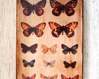Butterflies Specimens Photo D -Wall Art