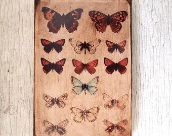 Butterflies Specimens Photo  E -Wall Art