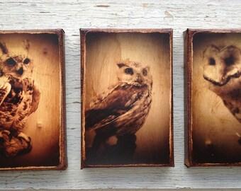 Wall Art - Set of 3  Owls   -photo portrait  small wall art 4x6