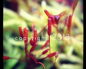 5x5 Fine Art Photograph - Little Tube Flowers - Instagram photo