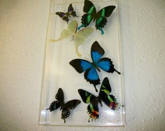 Artist Signature Multi Butterfly Wall Mount