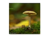 Dining with the Mushrooms Photograph Print Tiny Table & Chairs Mycology Forest Floor Magical Woods Mushroom Fungi