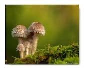 Mushroom Photograph Mushroom Print Affordable Home Photography Prints Nature Photography Decor Nature Lover Woodland Scene Fungi