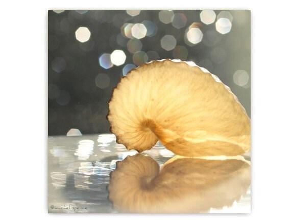 Paper Nautilus Photograph Affordable Art Beach Decor Ocean Sea Salt Natural Art Bokeh Nautilus Shell Beauty