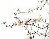 Pink Star Magnolia Flower Minimalist Botanical Spring Decor Wall Print