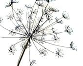 Dreamy Photo Botanical Print Herb Art Minimal Large Nature Photo