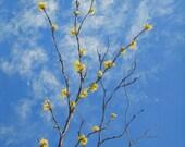 BLUE SKY and LEMONADE - 10 x 10 Original Acrylic on Canvas - Nature Art