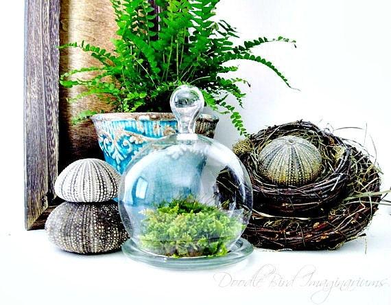 Glass Cloche Terrarium Planter/ Small Bell Jar / DIY Terrarium Kit / Easy Houseplant