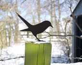 Garden Bird, looking for the worm, Metal Blackbird