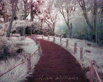 Path 2 - Infrared Photograph - 8.5 x 11