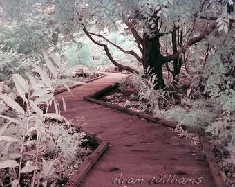 Path 1 - Infrared Photograph - 8.5 x 11
