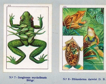 1932 Vintage Spanish Sheet of Illustrations on Animals Protecting Their Young. Sheet 23