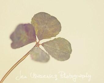 Four Leaf Clover Photography Print