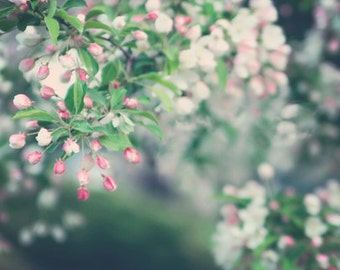 Nature Photography Spring macro blossoms romantic for her women light pink blooms green white home decor flowers leaves - Fine Art Photo