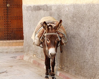 "Donkey, burro, morocco, travel, transportation, animal, culture, nature, urban, grey, brown, orange, fine art photograph 8""x12"""