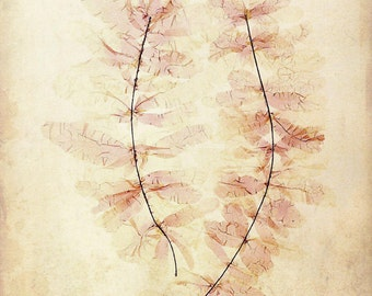"Antique Botanical Print ""Ghost Leaves"" Victorian Floral Pressed Flowers - Vintage Woodland - Pink Sepia Leaves"
