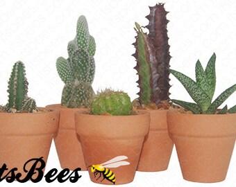 "Collection of 25 Cactus Assorted Plants in 2"" Clay Pots - Wedding, Guest Favors, Terrarium, Centerpieces, Gardens"