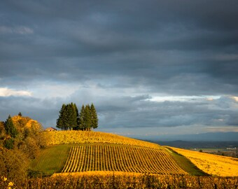 Autumn Photography Vineyard Photo Fall Colors Wine Oregon Willamette Valley Yellow Leaves  nat74