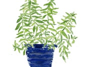 Art print Lemon verbena plant in a Blue planter, print of watercolor painting, herb, kitchen decor, mothers day, minimalist, Cottage chic,