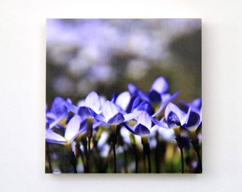 Purple, White, Bluets, Flowers, Spring Blooms, CLEARANCE, Nursery Art, Nature Photo, 8X8 Wood Panel, Wall Art, Shelf Art, Ready to Hang