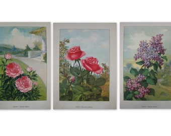 Vintage Flower Garden Prints Rose Lilac Peony TWO prints