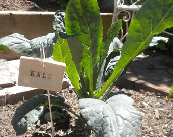 Kale Plant Marker