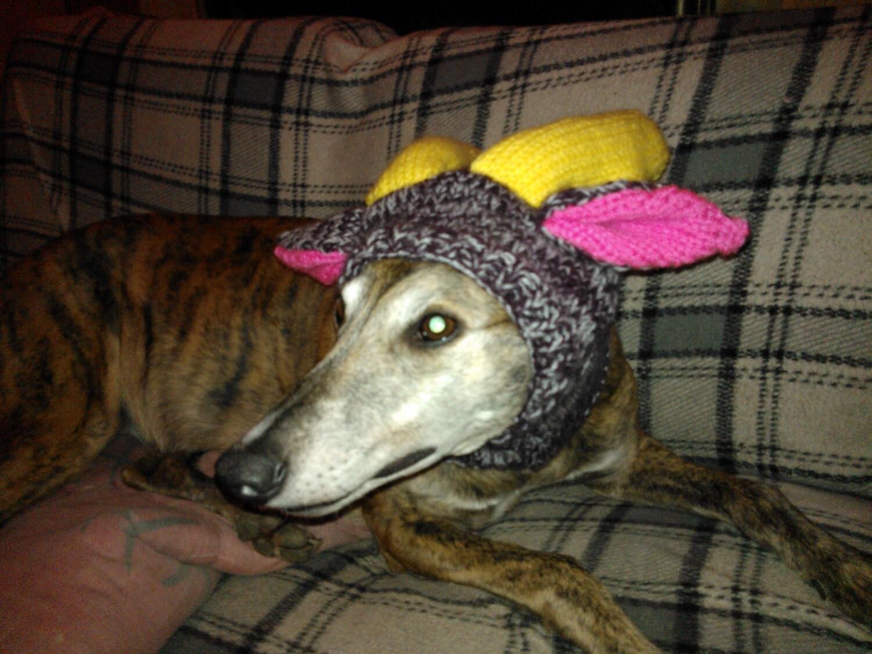 Knitting Pattern Reindeer Hat : Greyhound Reindeer Hat knitting pattern