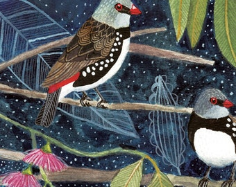Diamond Firetail Finch Birds Art Print 8x10