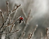 Gray & Red Winter Wall Art- Nature Photography- Rustic- Red Silver Neutral Gray Wall Art, Winter Frost