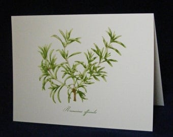 ROSEMARY Herb Botanical Card