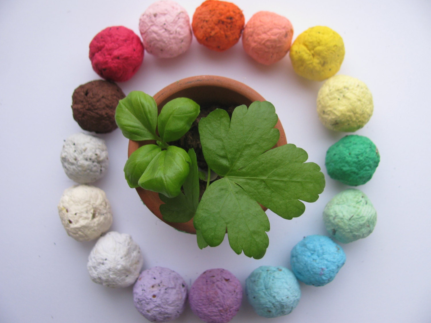 NEW100 HERB Seed Bombs