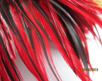 "2"" strip about 60 feathers of Strung Badger Saddles Rooster feathers in raspberry with black - individual feather about 4.5-5"""