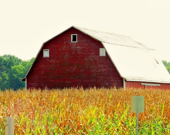 Barn and Corn Field Near Lewisberg Indiana  P-45