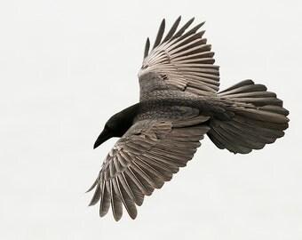 Raven in the Fog 2